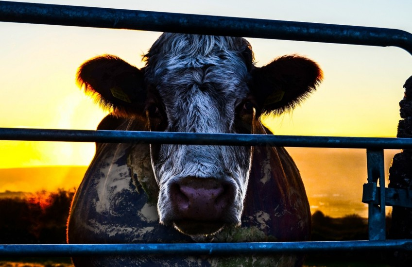 Cowspiracy: The Sustainability Secret image