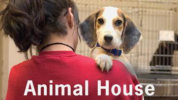 Animal House image